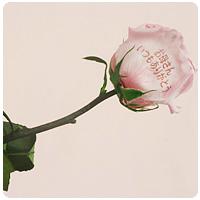 お母さんへの感謝の気持ちを 一輪のバラにこめてお届けします。 おしゃれな箱に入れてお届けいたし ます☆プリザーブドフラワーなので 長期間お楽しみいただけます♪